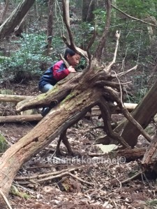 倒木、折れた枝、落ち葉がたくさん