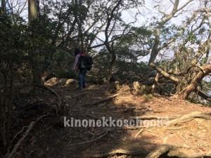 木の根っこや石を越えて歩く